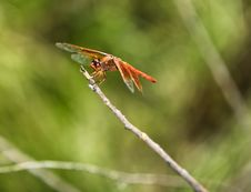 Free Dragonfly Royalty Free Stock Images - 6563699