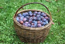 Free Plums In The Basket Royalty Free Stock Photo - 6563705