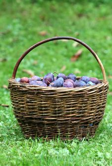 Free Plum Basket Stock Photography - 6563742
