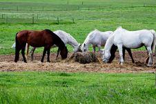 Free Five Horses Eat Royalty Free Stock Photos - 6564458