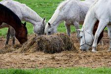 Free Five Horses Eat Stock Image - 6564501