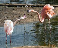 Free Flamingo Stock Photos - 6564563