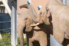 Free Elephant Stock Photos - 6564763