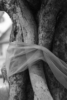 Free Sacred Tree Royalty Free Stock Photo - 6565005