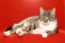 Free Indolence Cat Royalty Free Stock Photography - 6565587