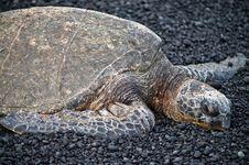 Free Turtle On Black Sand Stock Photos - 6566023