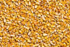 Dried Corns Royalty Free Stock Photography