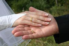 Free Wedding Rings Royalty Free Stock Photos - 6566958