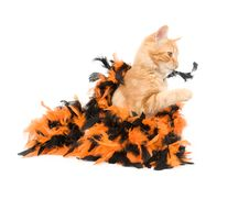 Free Kitten And Halloween Decoration Stock Image - 6566991