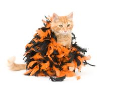 Free Kitten And Halloween Decoration Stock Photography - 6566992