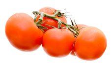 Free Tomatoes Stock Photos - 6567263