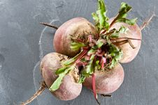Free Bunch Of Fresh Beetroot Stock Photography - 6567432