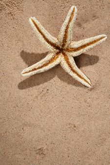 Free Starfish On A Beach Sand Royalty Free Stock Images - 6568489