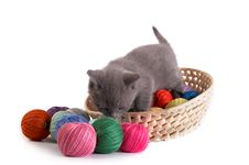 Free Kitten Plays On A White Background Stock Photography - 6568902