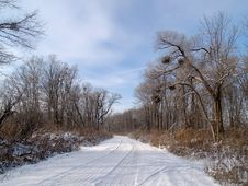 Free Wood Road In The Winter Royalty Free Stock Images - 6569499