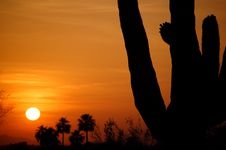 Free Saguaro Stock Photo - 6569620