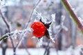 Free Frosty Morning Stock Photo - 65663100