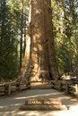 Free Sequoia Stock Photography - 6576412
