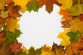 Free Frame From Autumn Maple Leaves Royalty Free Stock Images - 6576609