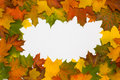 Free Frame From Autumn Maple Leaves Royalty Free Stock Photos - 6576628