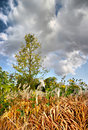 Free Autumn Landscape Stock Image - 6579431