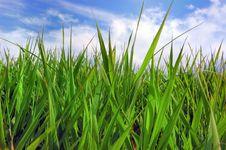 Free Green Grass Stock Image - 6570171