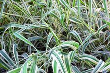 Free Green Grass Stock Photography - 6570182
