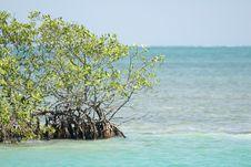 Caye Caulker, Belize Stock Photo