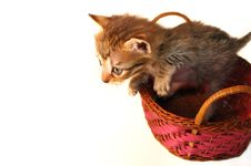Free Tiny Kitten Royalty Free Stock Photos - 6570698