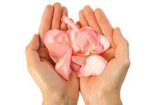 Rose Petals 2 Stock Images