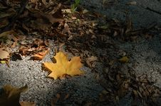 Free Yellow Leaf Royalty Free Stock Photo - 6573535
