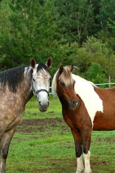 Free Horse Couple Stock Image - 6574461