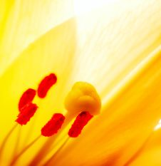 Free Lilly  Flower Closeup Royalty Free Stock Photos - 6574838