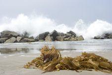Free Seaweed Stock Photos - 6574943
