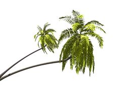 Free Palmtree Royalty Free Stock Images - 6575089