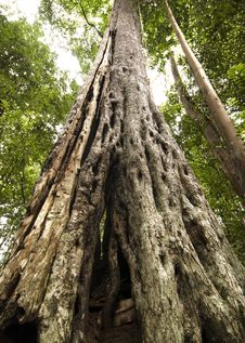 Free Tree Trunk Stock Images - 6575164