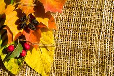 Free Autumn Border Horizontal Stock Photography - 6576112