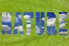 Free Closeup Of A Green Leaf Word Royalty Free Stock Photos - 6576308