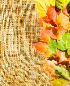Free Vertical Autumn Border Stock Photo - 6576680