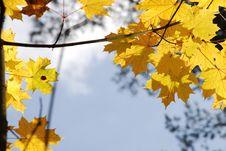 Free Mellow Autumn Royalty Free Stock Photography - 6578437