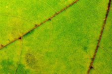 Free Leaf Texture Royalty Free Stock Images - 6578609