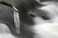 Free Icicle On Branch Stock Images - 6579134