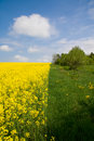 Free Yellow-green Meadow Under Blue Cloudy Sky Royalty Free Stock Photography - 6581007