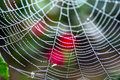 Free Spider Web With Water Drops Royalty Free Stock Photography - 6581047