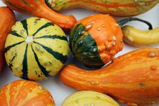 Free Fall Gourds Royalty Free Stock Image - 6580136