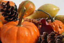 Festive Fall Gourds Royalty Free Stock Photos