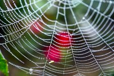 Spider Web With Water Drops Royalty Free Stock Photography