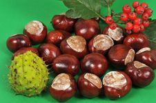 Free Chestnuts And Leaves, Fall Is Coming Royalty Free Stock Photos - 6581158