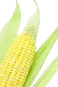 Free Corn Stock Image - 6581401