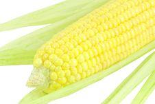 Free Corn Stock Photo - 6581460